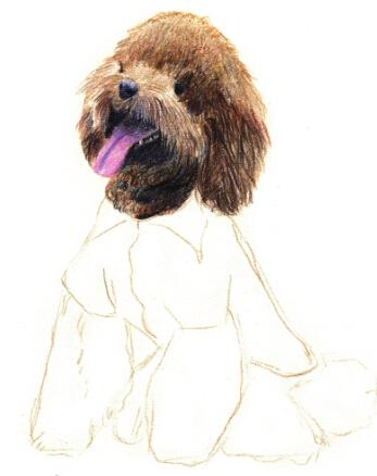 5,用以上几个步骤的方法,逐步深入刻画泰迪狗整个头部的体积感.