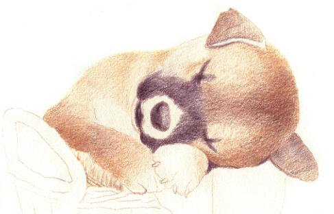 萌宠睡觉图片大全可爱