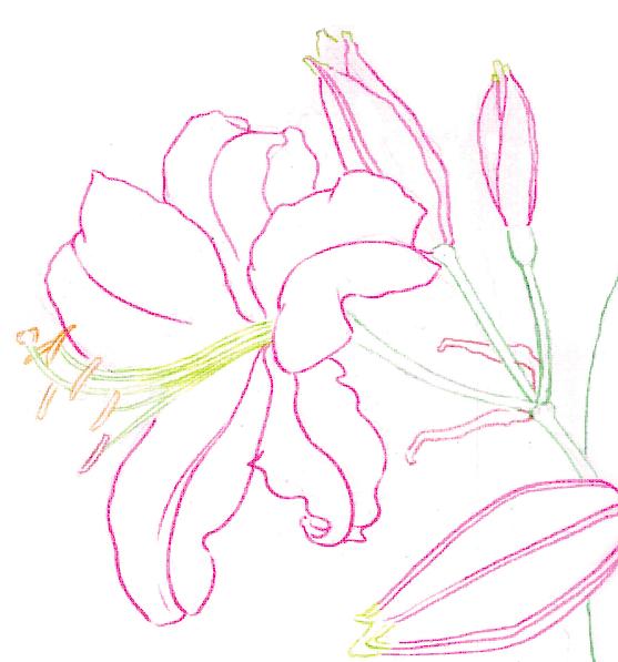 橡皮刻章图片素材花