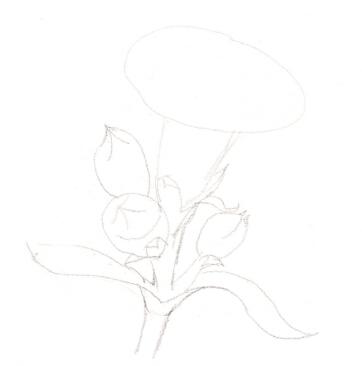 康乃馨简笔画步骤图解