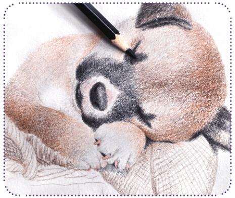 在用深颜色铅笔画亮部的时候,用笔一定要轻,能够将画出来的调子控制