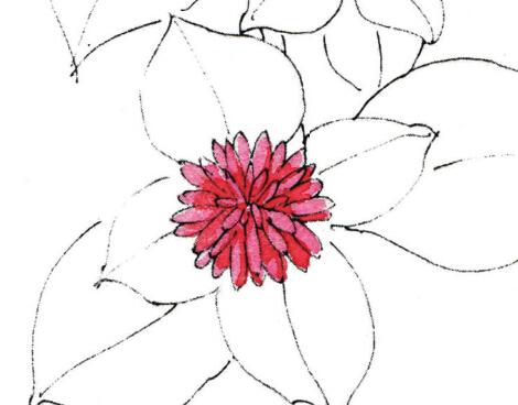 红色花的绘画案例--牡丹吊兰